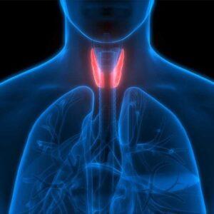 Thyroid Optimization